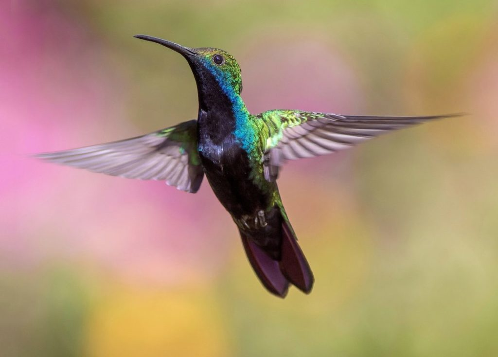 L'ALGORITHME HUMMINGBIRD OBSERVÉ À LA LOUPE